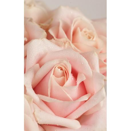 Composez votre bouquet de roses colorées