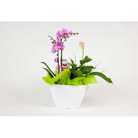Orchidée duo avec plante verte