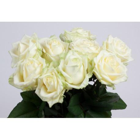 Composez votre bouquet de roses blanches