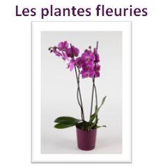 plantes fleuries reynaud fleurs