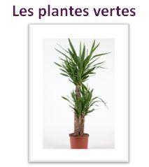 plantes vertes reynaud fleurs